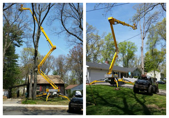 Large Tree Removal in East Hartford, Connecticut, CT