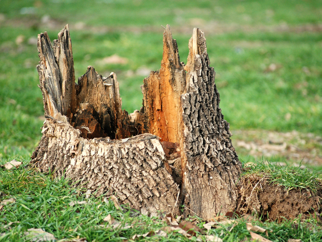 Tree Stump Grinding in East Hartford, Connecticut, CT