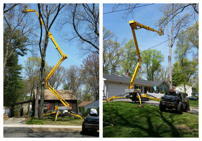 Large Tree Removal in Manchester, Connecticut, CT