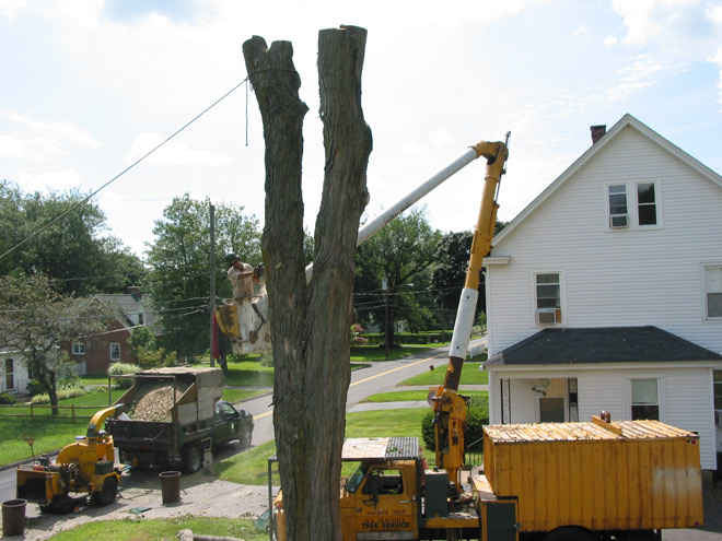 Tree Grinding in Manchester, Connecticut, CT