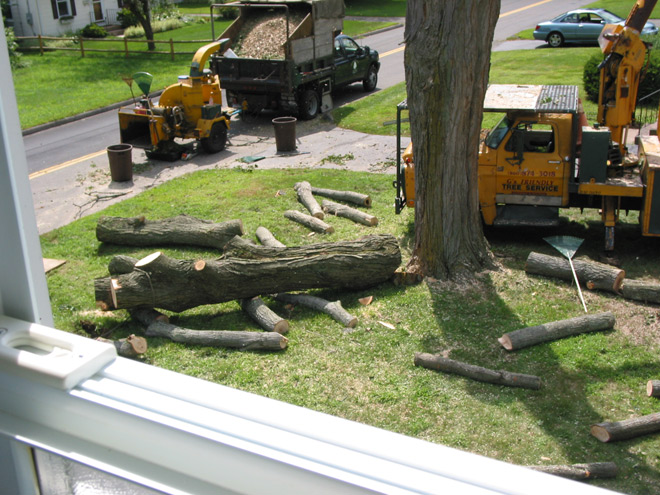 Tree Removal in Manchester, CT