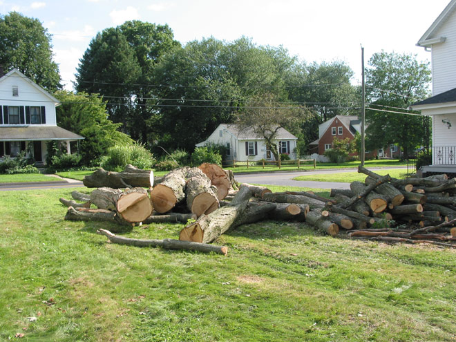 Tree Removal Services in Manchester, Connecticut, CT