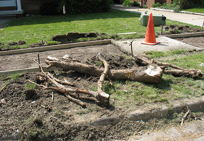 Tree Root Removal Services in Manchester, Connecticut