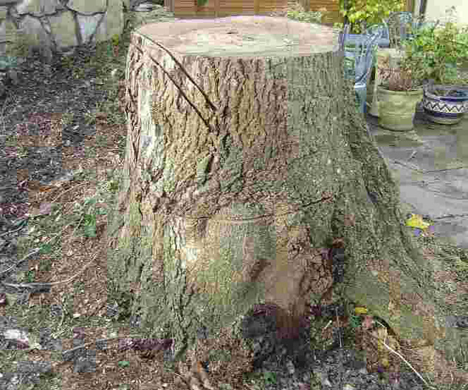 Tree Stump Removal Products For Manchester Ct