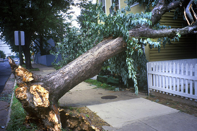 Tree Stump Removal Service in Manchester, Connecticut